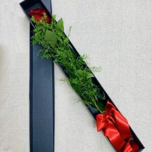 Rosa rossa – Black Box