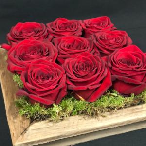 Rose in cornice