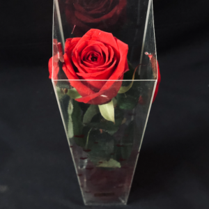 Rosa Rossa – Messaggio in bottiglia